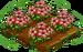 Garnet Poppy 100