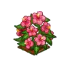 Perfect Pink Hibiscus-icon