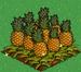 Pineapple extra100