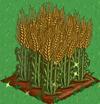 Wheat extra100