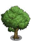 Chestnut Tree1-icon