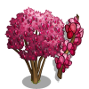 Oklahoma Redbud Tree-icon
