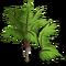 Teddy Bear Palm Tree-icon