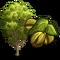 Pecan Tree-icon