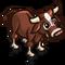 Red Devon Ox Calf-icon