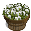 Chinese Cotton Bushel-icon