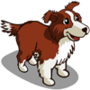 Border Collie Adult-icon