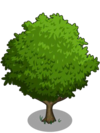 Asian Pear Tree1-icon