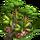 Rainforest Event-icon