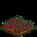 Straspberry extra100