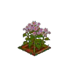 Wither Bunch Pink Aster-icon