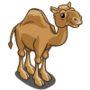 Camel-icon