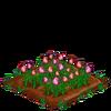 PinkRoses-66