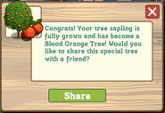 Blood Orange Tree Growth Message