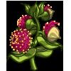 Eucalyptus Bud-icon