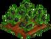 Jungle Blackberry 100