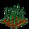 Bamboo-66