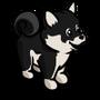 Black Shiba Inu Puppy-icon