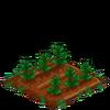 GreenTea-33