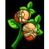 Cane Knot Kumquat-icon