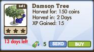 Damson Tree Market Info (January 2012)