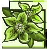 Green Hellebores-icon