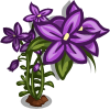 Royal Bluebell Full Bloom-icon