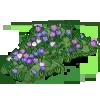 Wild Crocus-icon