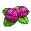 Ornamental Cabbage-icon