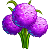 Allium Bulbs-icon