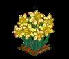 Daffodils-perfectbunch