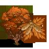 Paperbark Maple Tree-icon