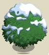 Alma Fig Tree7-icon