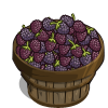 Darrow Blackberry Bushel-icon