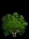 Giant Cocoa Tree1-icon