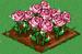 Glass Rose extra100