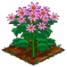 Super Pink Aster extra100