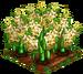 Popcorn (crop) 100