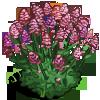 Red Valerian-icon