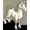 White Arabian Horse-icon