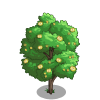 American Basswood Tree-icon