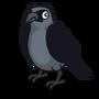 Jackdaw-icon
