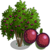 PassionFruitTree