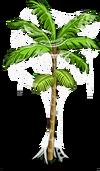 Acai Tree3-icon