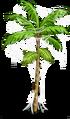 Acai Tree3-icon.png