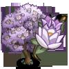 Purple Magnolia-icon