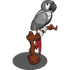 African Gray-icon.png
