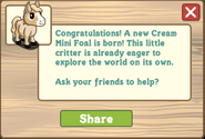 Cream mini foal message