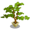 Fir Bonsai Tree-icon