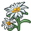 Edelweiss-icon